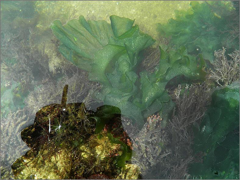 F_ZEEFL_0008_zeesla_algae sp