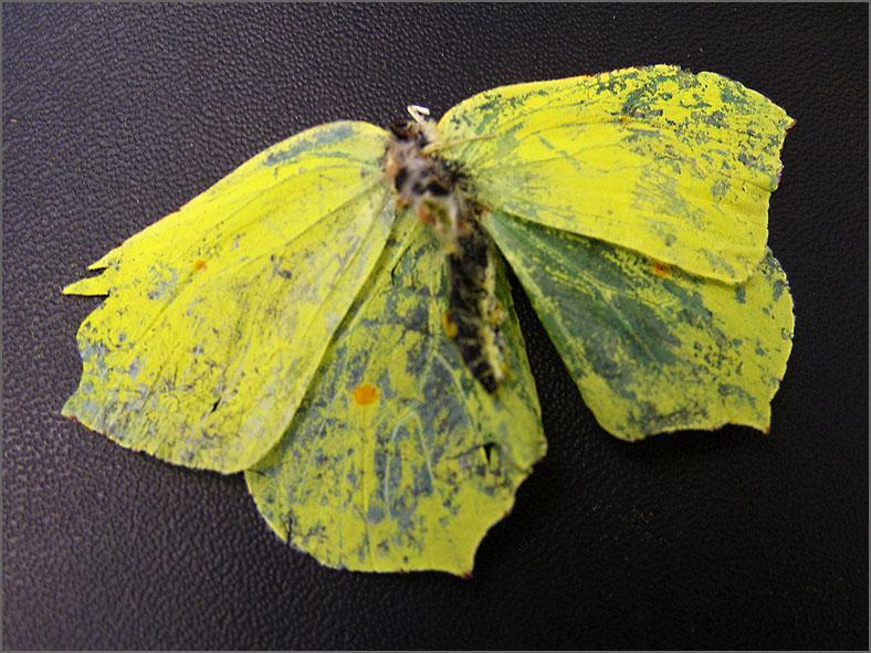 LVD_VERKEER_0022_trafic_citroenvlinder_gonepteryx rhamni