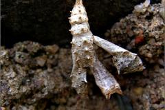 POP_0015_lepidoptera sp