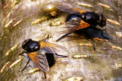Vliegen en muggen