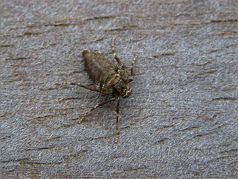 SPAN_0180_kleine wintervlinder_vr_operophtera brumata
