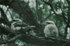 Vogels_algemeen