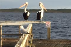 Water- en weidevogels